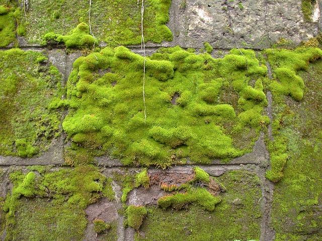 Wilgotne ściany - przyczyny