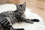 Mieszkanie idealne dla kota