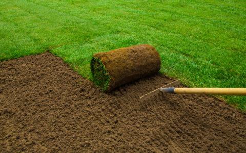 Z rolki czy z siewu – który trawnik wybrać?