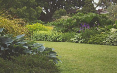 Wszystko na temat systemu nawadniania ogrodu