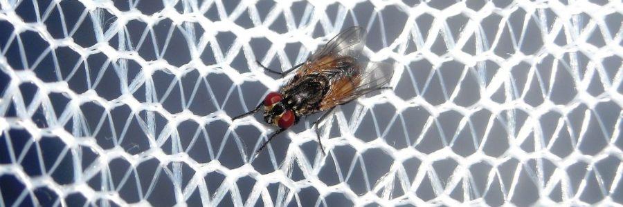 Moskitiera – czyli skuteczna ochrona przed insektami